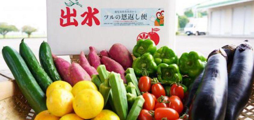 第4回(8月)出水市の野菜便