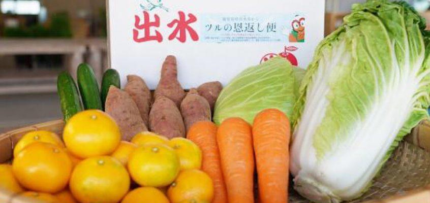 第7回(11月)出水市の野菜便