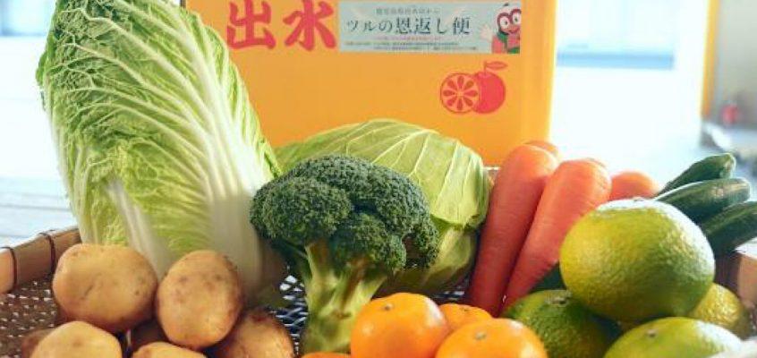 第8回(12月)出水市の野菜便