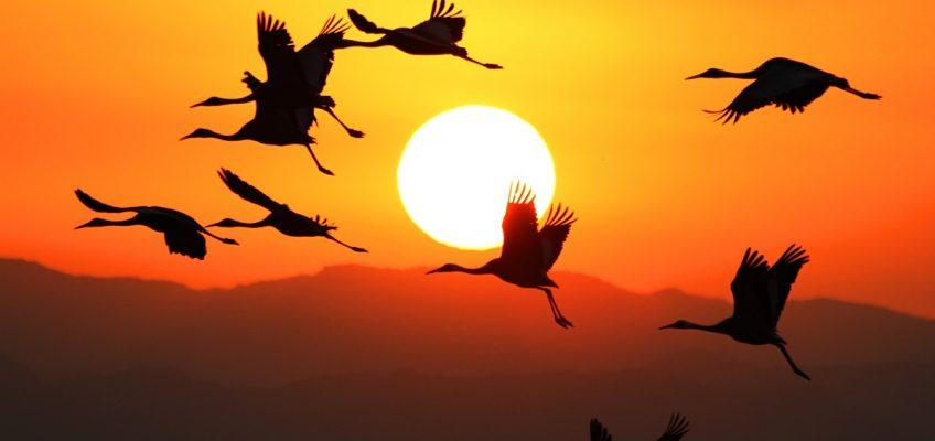朝陽の飛翔